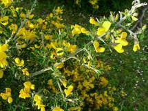 Decouvrez En Image La Flore Endemique Ajaccienne Page 2
