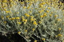 découvrez en image la flore endémique ajaccienne | page 2